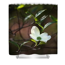 Morning Dogwood At Buffalo River Trail Shower Curtain by Michael Dougherty