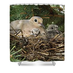 Morning Dove And Two Babys #2 Shower Curtain