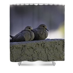 Morning Doves Shower Curtain by Anne Rodkin