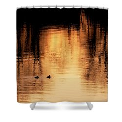 Shower Curtain featuring the photograph Morning Ducks 2017 Square by Bill Wakeley