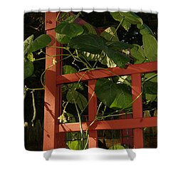 Morning Garden Bean Plants Shower Curtain