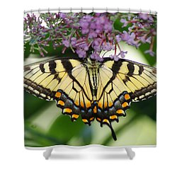 Morning Garden  Butterfly Shower Curtain