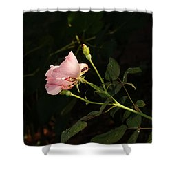 Morning Garden Pink Hibiscus Shower Curtain