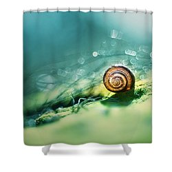 Morning Glare Shower Curtain by Jaroslaw Blaminsky