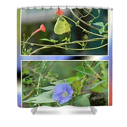 Shower Curtain featuring the photograph Morning Glories And Butterfly by EricaMaxine  Price