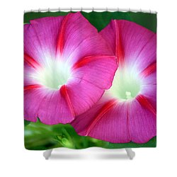 Shower Curtain featuring the photograph Morning Glories by Sheila Brown