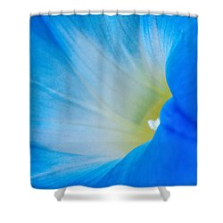 Morning Glory Shower Curtain by Carolyn Dalessandro