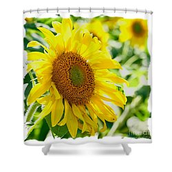 Morning Glory Farm Sun Flower Shower Curtain by Vinnie Oakes