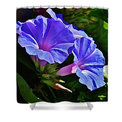 Morning Glory Flower Shower Curtain by Werner Lehmann