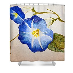 Morning Glory Shower Curtain by J R Seymour