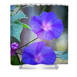 Morning Glory Shower Curtain by Kathy Baccari