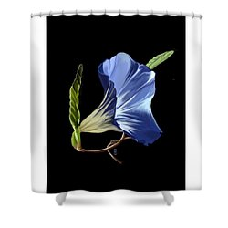 Morning Glory Shower Curtain