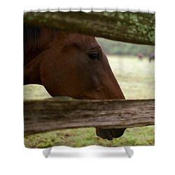 Morning Greeting Shower Curtain