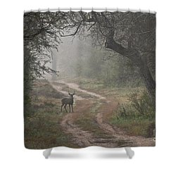 Morning Highlight  Shower Curtain