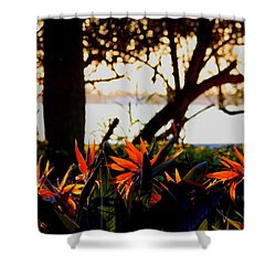 Morning In Florida Shower Curtain by Diane Merkle