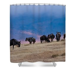 Morning In Ngorongoro Crater Shower Curtain by Adam Romanowicz