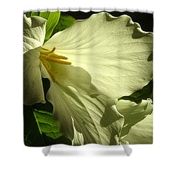 Morning Light - Trillium Shower Curtain by Angie Rea