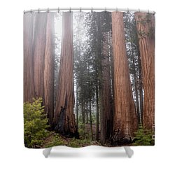 Shower Curtain featuring the photograph Morning Light In The Forest by Peggy Hughes