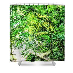 Morning Light In The Forest Shower Curtain