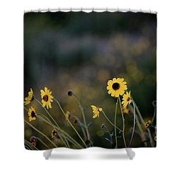 Shower Curtain featuring the photograph Morning Light by Kelly Wade