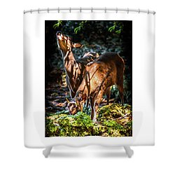 Shower Curtain featuring the photograph Morning Light Of Dawn by Karen Wiles