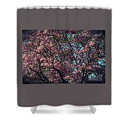 Morning Lit Magnolia Shower Curtain