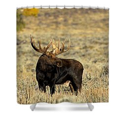 Morning Moose Shower Curtain