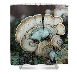 Morning Mushroom Shower Curtain