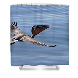 Morning Pelican Shower Curtain