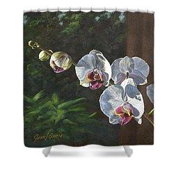 Morning Phaleanopsis Shower Curtain