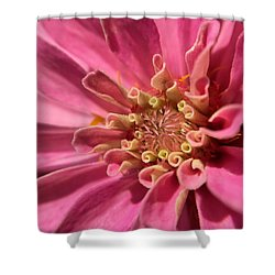 Morning Pink Shower Curtain
