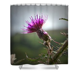 Morning Purple Thistle. Shower Curtain
