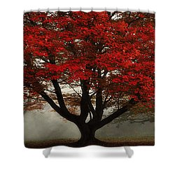 Shower Curtain featuring the photograph Morning Rays In The Forest by Ken Smith