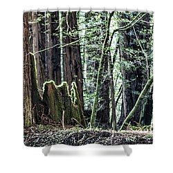 Shower Curtain featuring the photograph Morning Redwoods by Shirley Mangini