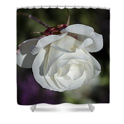 Morning Rose Shower Curtain by Dan Hefle