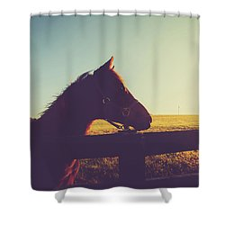 Shower Curtain featuring the photograph Morning  by Shane Holsclaw