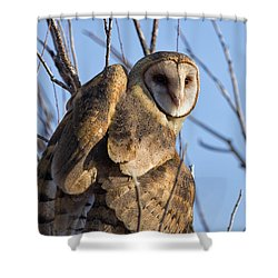 At The Dawning Of The Day Shower Curtain