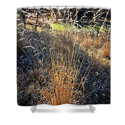 Morning Sun Backlights Fall Grasses In Glacial Park Shower Curtain