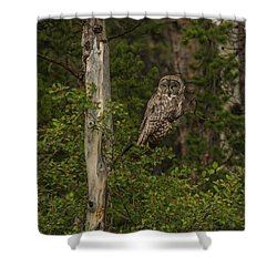 Morning Sun On A Great Grey Shower Curtain