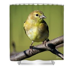 Shower Curtain featuring the photograph Morning Visitor  by Ricky L Jones