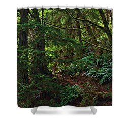 Shower Curtain featuring the photograph Morning Walk by Craig Wood
