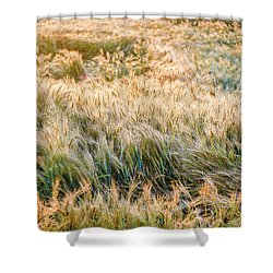 Morning Wheat Shower Curtain
