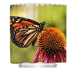 Morning Wings Shower Curtain by Yumi Johnson