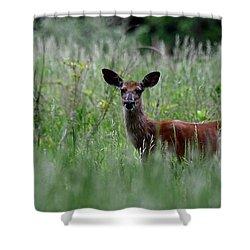 Morninng Deer Shower Curtain