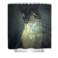 Morphing Shower Curtain