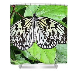 Mosaic Wing Spread Shower Curtain