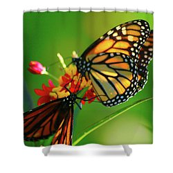 Mosaic Wings Of Light Shower Curtain
