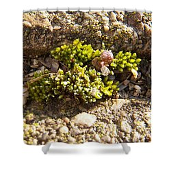 Moss And Pebbles Shower Curtain