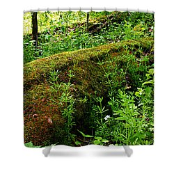 Moss Covered Log 2 Shower Curtain