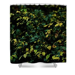 Moss In Colors Shower Curtain